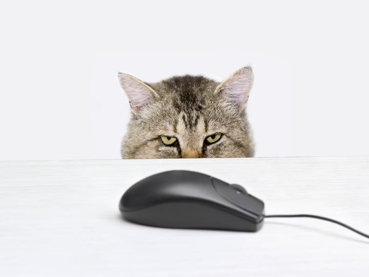 Playing Cat and Mouse: How to Be Healthy While You Work