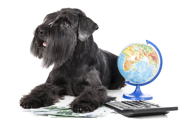 "Stop Doing Business Like It Is A ""Dog Eat Dog"" World And Start Succeeding"